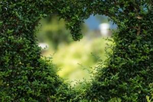 coeur plantes